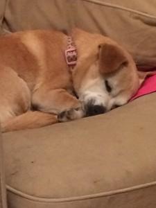Sleepy beastie